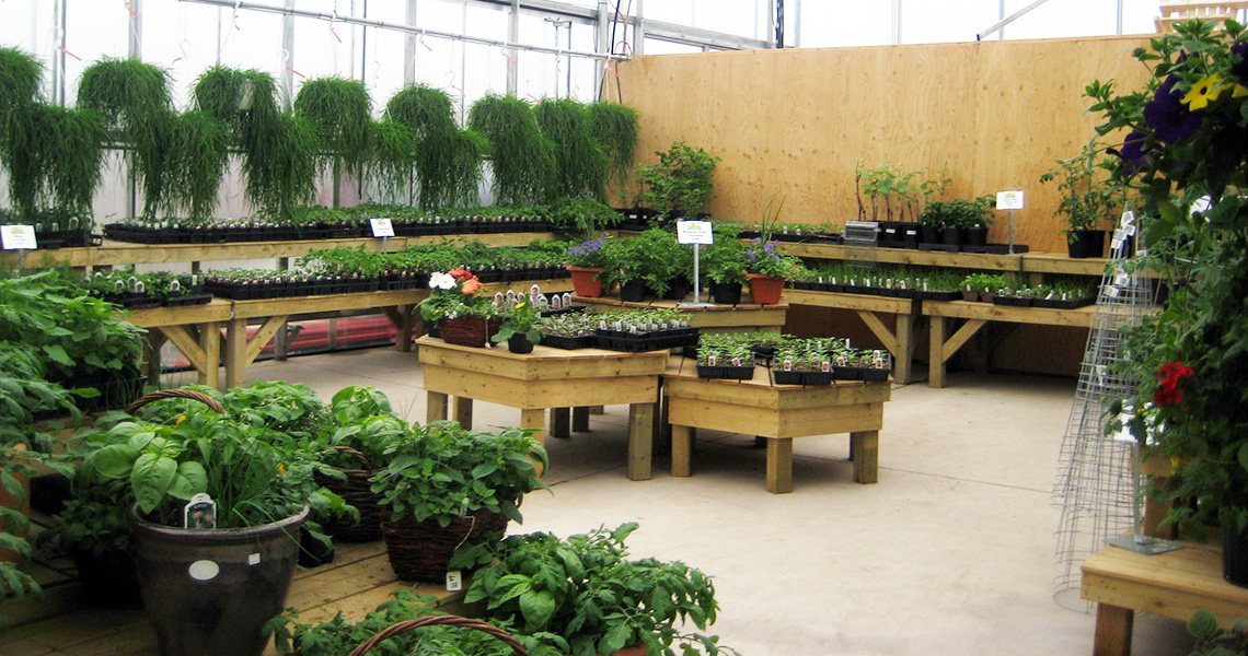 Jewell's Country market Plant Care